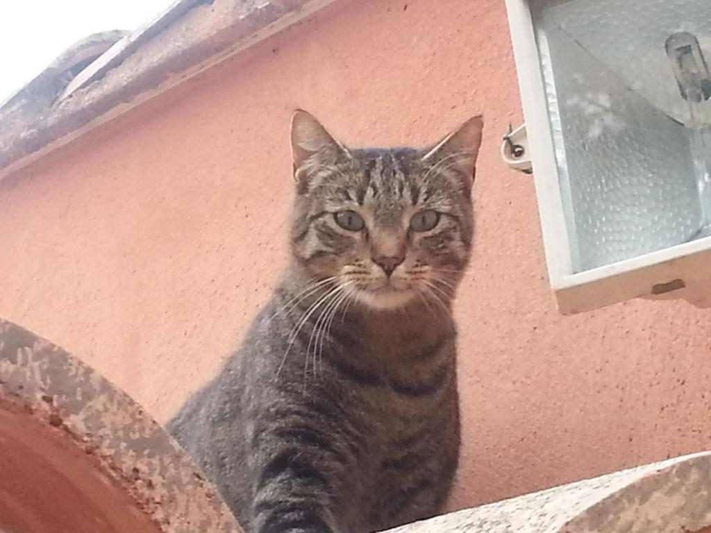 Notre chat : Moutsina
