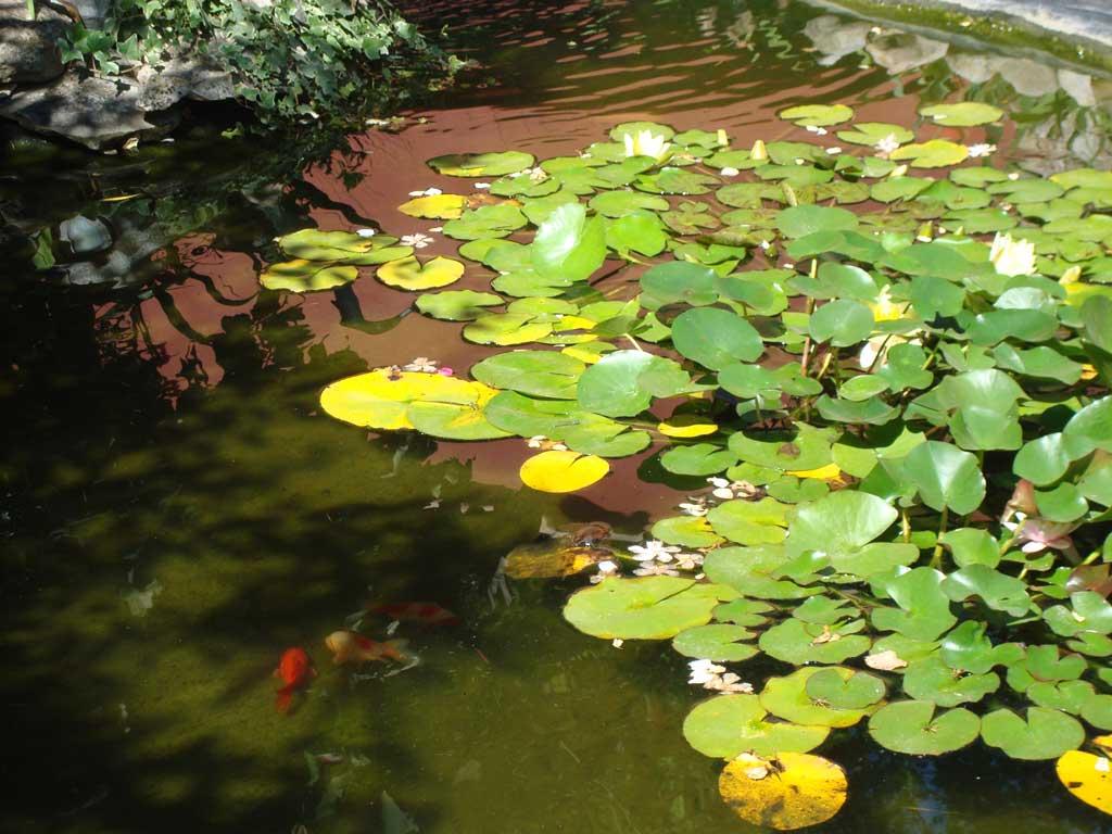 Villa Deylof - Les poissons