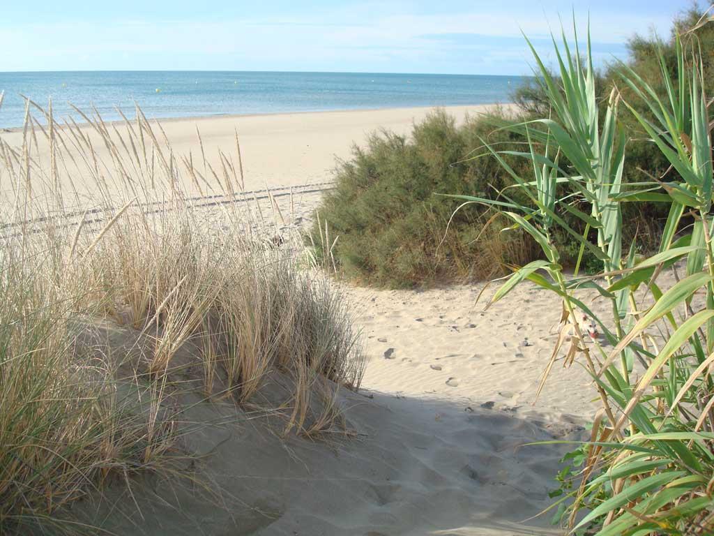 Les dunes du Cap d'Agde